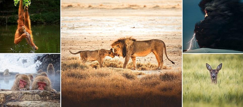 """الصور المدهشة في القائمة المختصرة في مسابقة مصور الطبيعة """"Wild2020"""""""